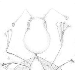 bugcolor2sm