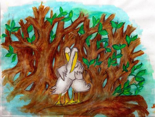 pelicanartwork