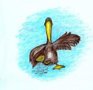 pelicanartwork2-300x292