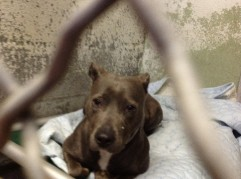Lydia spent most of her time behind bars at the Westchester Animal Hospital. Due to the new fenced area at WHS, she can spend time outside the bars. See her play in the video below.