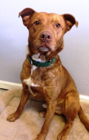 Oscar is available for adoption from the SPCA of Westchester.