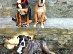 Suruluna is located on seven acres in Hudson Valley. Pictured here are the founding dogs! (Photo courtesy of Suruluna.org)