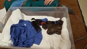 maddie's pups1