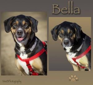 Bella-nine