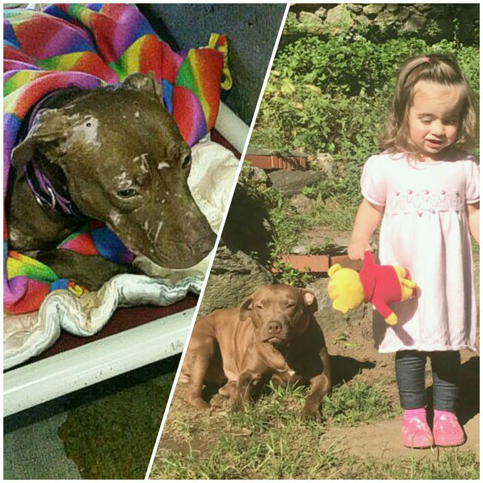 Left: the day Jada Rosie was picked up from the shelter. Right: Jada Rosie with her foster family's little girl.