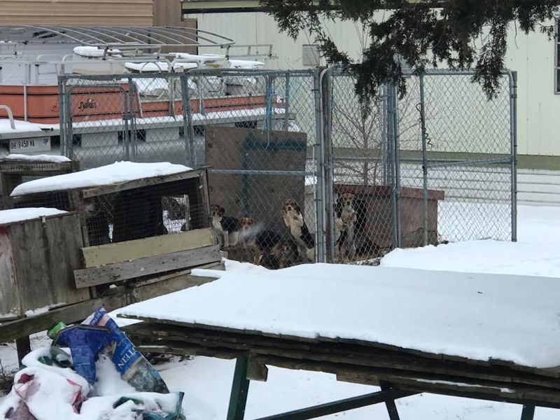 23 Dogs Left Out In Cold at Condemned Home