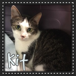 Kit was rescued by NC Dog Rescue.