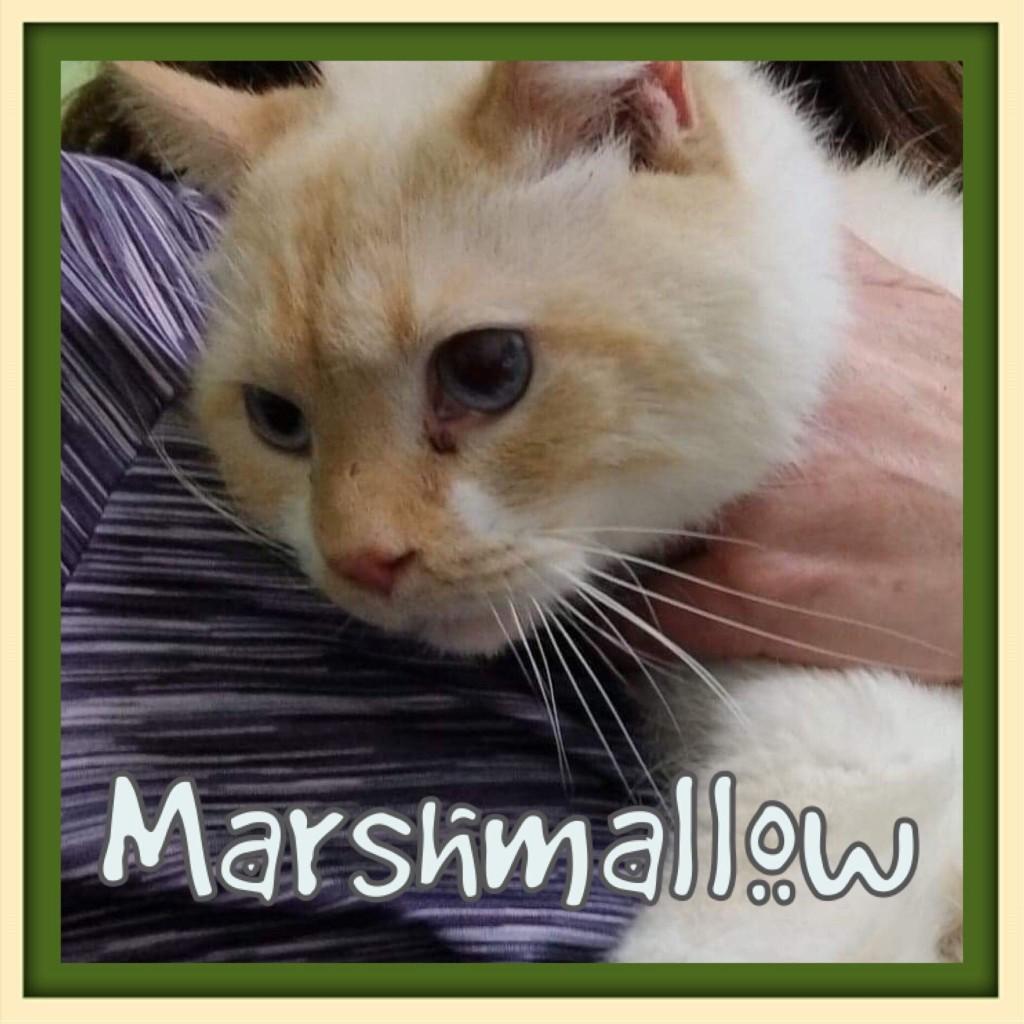 marshmallow - animal life