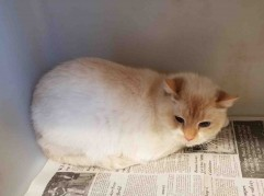 Marshmallow is available for adoption through Animal Life Rescue. Contact Bryan Rouse at animallifeinc@gmail.com for more information.