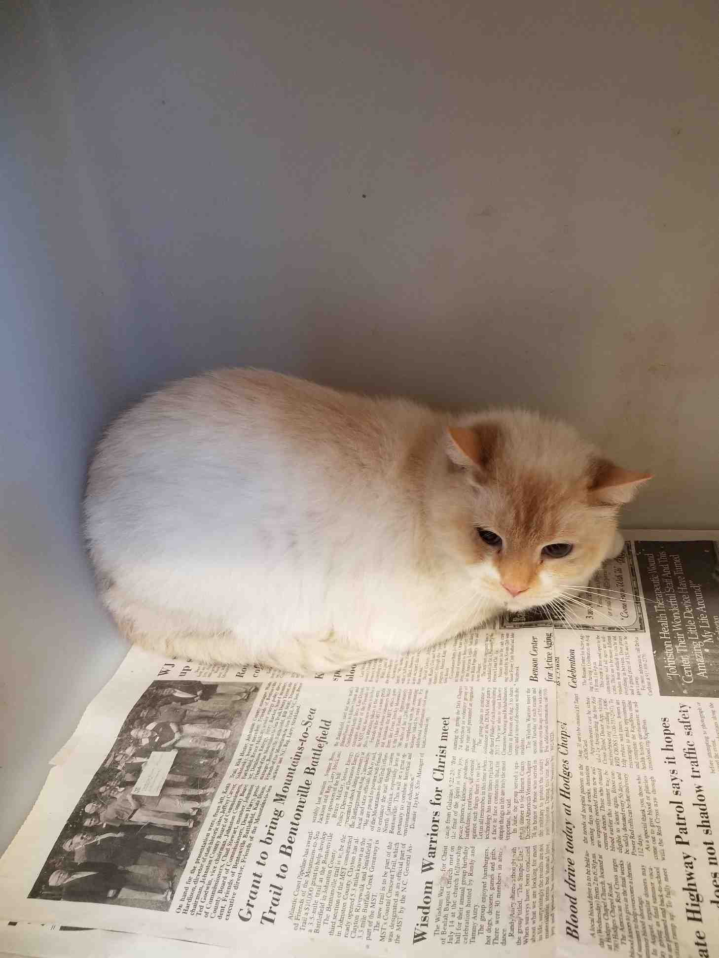 Adopt Me? A little shy, Gorgeous Marshmallow is Sweet, too!