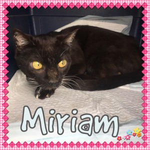 miriam - nc dog rescue
