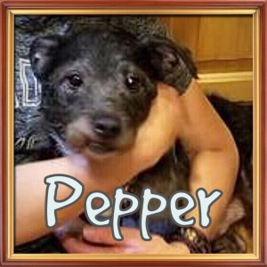 pepper (dog) red barn