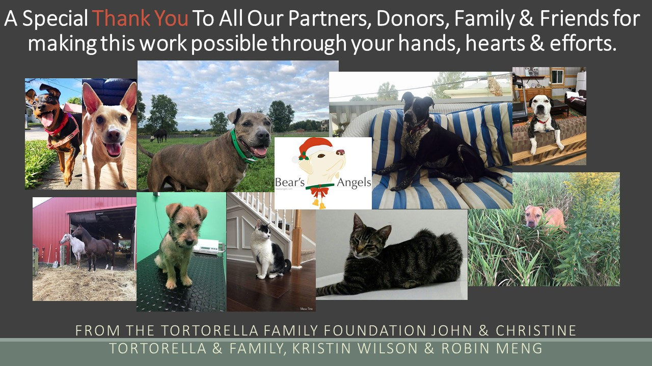 The 2018 Tortorella Family Foundation Year In Review!