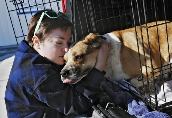 Columbus Dispatch: Puppy Mill Law in Ohio Has Made Heroes of Dog Rescue Teams