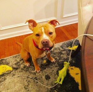 Reign was adopted after participating in The Way Home
