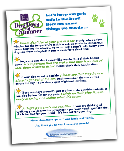 dog-day-summer-flyer