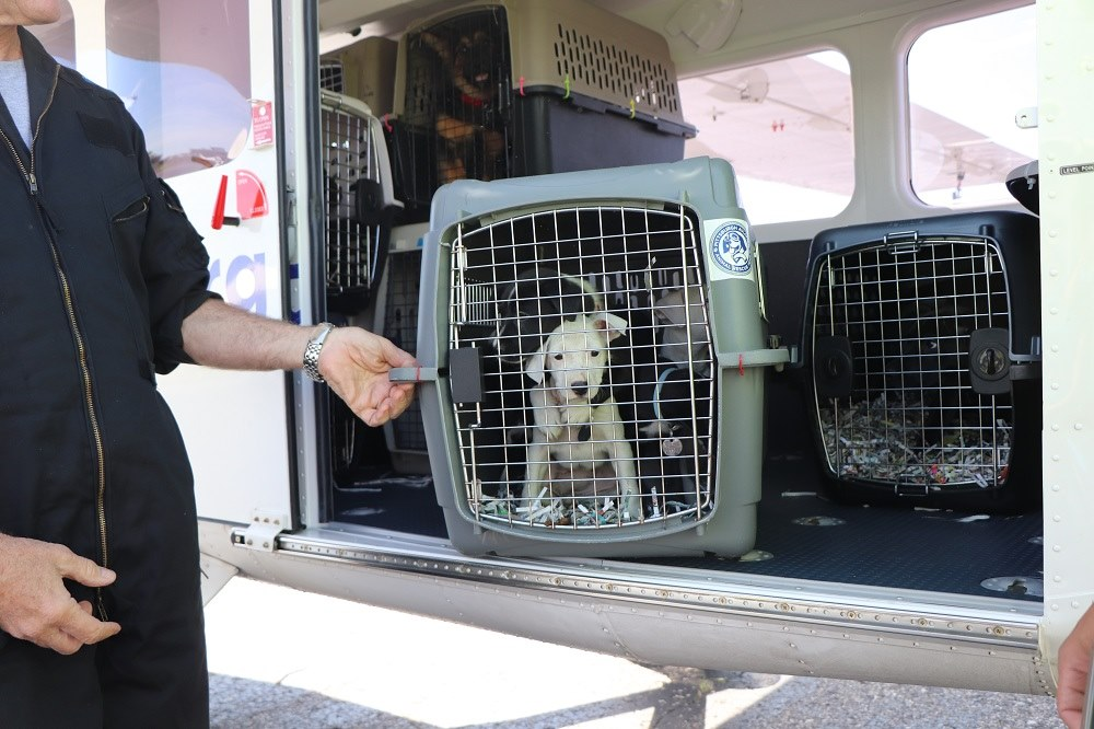 Spotlight on Kindness – Grants 2019 – SAVE Ohio Pets/ Pittsburgh Aviation Animal Rescue/Pike Pet Pals/Facilitate Rescue