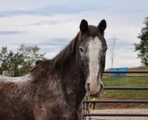 Chip was rescued by Bella Run Equine