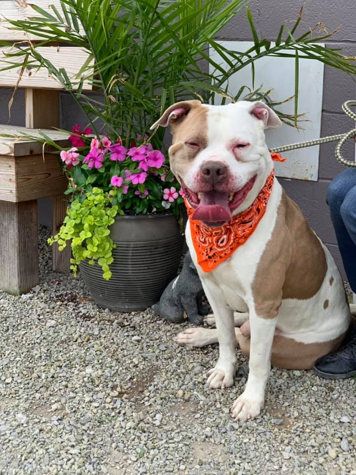 Meet some Happy Faces from Muskingum County Dog Warden and Adoption Center